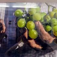 Moscata–Malaga Wine–Cleopatra's Wine